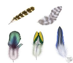 Plumas con fondo transparente en PSD (PSD Feathers transparente background) | Recursos 2D.com
