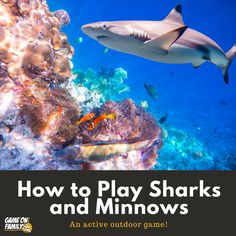 How to Play Sharks and Minnows – an active outdoor game! Outdoor Games To Play, Cool Games To Play, Indoor Games, Backyard Games, Indoor Activities, Summer Activities, Shark Games For Kids, Water Games For Kids, Summer Fun List