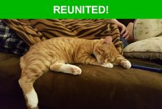 Great news! Happy to report that Oscar has been reunited and is now home safe and sound! :)
