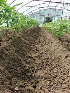 Diy And Crafts, Solar, Organic, Green, Life, Gardening, Tomatoes, Agriculture, Plant