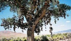 Most kids lose a pair of shoes in a tree due to a playmate's prank. But now, that child's play has been turned into interactive art at the Shoe Tree near Middlegate, Nevada. Already covered in more shoes than you can count, the tree's branches are draped with footwear from both tourists and locals alike. Address: Highway 50, Middlegate, Nevada
