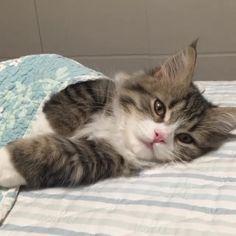 Maybe I'll get up...maybe I won't...