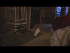 Gotcha playing with a pitbull! - YouTube