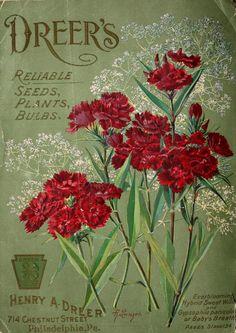 Imgdessins Plantes Et Fleurs Jardins Et Appartements