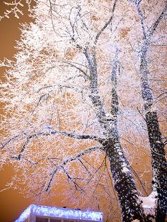 """This amazing """"winter wonderland""""-style frost took over the city, Helsinki, Finland"""