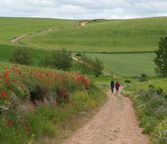 Poppies by the path...Camino de Santiago