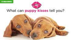 Healthy puppy teeth = sweet puppy kisses! Click for tips to care for your dog's mouth,