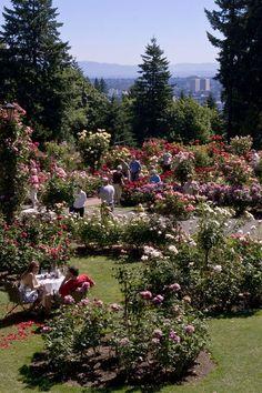 Visit Portland Oregon, Rose Garden Portland, Oregon Travel, Travel Portland, Multnomah Falls, Modern Garden Design, Garden Park, Coming Up Roses, Garden Boxes
