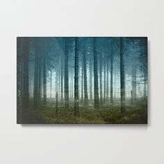 Spooky fir forest on a misty November day - textured and manipulated photograph
