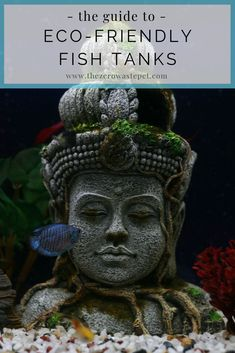 Have you ever thought about the environmental impact of your pet fish? Here are some easy, practical ways to keep an eco-friendly fish tank in your home! #ecofriendly #fishcare Aquarium Store, Fish Care, Saltwater Tank, Pet Fish, Marine Aquarium, Indoor Plant Pots, New Tank, Love Your Pet, Colorful Fish
