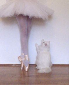 a.dorable ballet and cats... Doesn't get much better than that