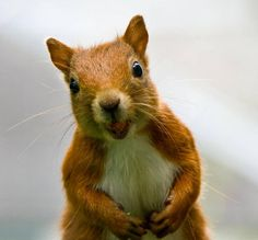 """""""Do you have any nuts?"""""""