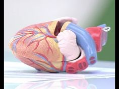 El corazón, ¿cómo funciona?