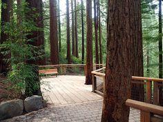 Hoyt Arboretum | Portland, OR