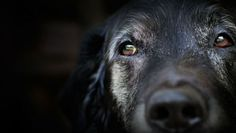 For many, the loss of a dog is harder than any other. Here's why.
