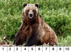 Jungle Theme Activities, Preschool Jungle, Animal Activities For Kids, Winter Activities, Forest Animal Crafts, Forest Animals, Maths Puzzles, Worksheets For Kids, Brown Bear