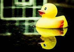 Duckling.