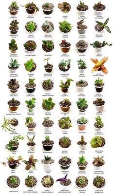 25 Types of Succulents & How to Grow It for Beginners Arten von Sukkulenten - Garden Types Types Of Succulents Plants, Propagating Succulents, Succulent Gardening, Succulent Terrarium, Cacti And Succulents, Planting Succulents, Container Gardening, Planting Flowers, Flowers Perennials