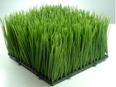 "9.00 SALE PRICE! $9.00, 4/$32.00Add a dash of green without the mess of gardening by using this artificial grass mat. Each flexible rubber mat measures 6"" square. The ..."