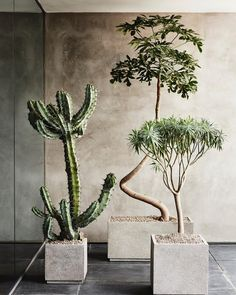 I just like this - so Im posting it. Styling moving by everyone else. Cactus, Indoor Plants, Potted Plants, Deco Design, Dried Flowers, Flowers Nature, Pool Landscaping, Container Plants, Green Plants