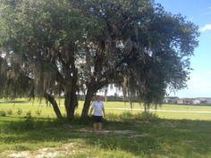 Big mossy oak in the back yard
