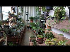 비오는날의 베란다 정원 - YouTube Plants, House, Ideas, Vegetable Garden, Home, Plant, Thoughts, Homes, Planets