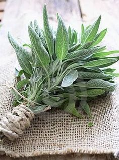 Adding sage to your campfire or fire pit keeps mosquitoes and bugs away. Good to know for an outdoor fire pit! Camping Info, Camping Survival, Go Camping, Camping Hacks, Camping Ideas, Camping Stuff, Camping Foods, Bbq Ideas, Party Ideas