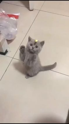 Playing with Cat