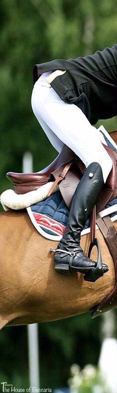 ~Dressage | The House of Beccaria