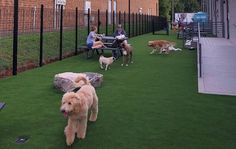 Shaggy Shack Pet Resort is a great solution for your dog when you're faced with long workdays or your dog doesn't like to be alone. Daycare Dogs enjoy playing with friends. Dog Boarding Near Me, Pet Resort, Dog Daycare, Singles Day, Happy Dogs, Shaggy, Dog Friends, Dog Mom, Pup