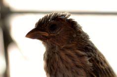 Passarinho, Bird