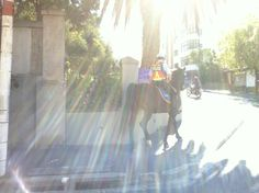 City police on horseback, always a delight to see. I really love this pic the way the sunlight entered. Makes me feel like we are protected by more than just the police. Love Pictures, Cape Town, Sunlight, Police, Fair Grounds, City, Travel, Viajes, Nikko