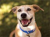 Adopt a Pet through PetSmart Charities