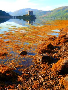"""fuckitandmovetobritain: """"Eilean Donan Castle, Scottish Highlands, Scotland, UK """" Scotland Uk, England And Scotland, Castle Scotland, Scotland Vacation, Scotland Travel, Wonderful Places, Beautiful Places, Scottish Highlands, Highlands Scotland"""