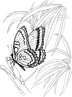 Butterfly Coloring Pages 33