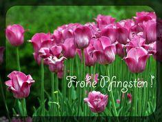Pfingsten - Kostenloses Hintergrundbild