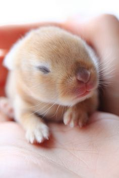 10-day old bunny: Sense of touch by Spice ♥ Darling, via Flickr