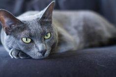 Cancer en los gatos