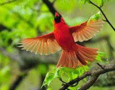 Memories to Cherish: Little Red Bird Cardinal Signns