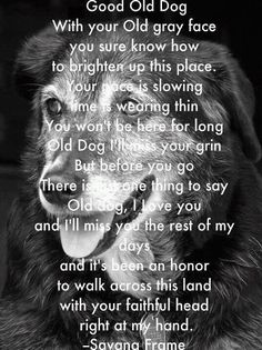 Poetry- Good Old Dog with your Old Gray Face, you sure know how to brighten up this place........ by Savana Frame