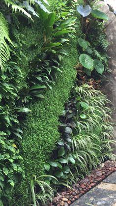 Close-up of a green wall. Vertical Garden Plants, Vertical Garden Design, Garden Landscape Design, Garden Landscaping, Small Gardens, Outdoor Gardens, Vertikal Garden, Plant Wall, Tropical Garden