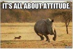 Attitude - David Icke Website