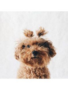 The 22 Most Adorable Pet-Beauty Photos Ever | http://allure.com