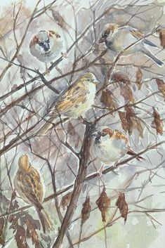 Smart Notebook Sparrows in the hedge Spring Is Coming, Bird Drawings, Paper Cover, Hedges, Painting & Drawing, Outdoor Gardens, Sparrows, Birds, Watercolor