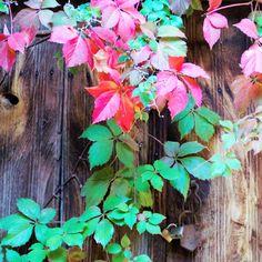 Autumn paints in colors that summer has never seen (y) #crete #meanwhileincrete #autumnincrete #autumn #greece #lovecrete