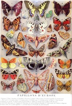 Butterfly a Thing of Beauty Butterfly Kisses, Butterfly Wings, Butterfly Frame, Beautiful Bugs, Beautiful Butterflies, Ernst Haeckel, Vintage Butterfly, Bugs And Insects, Moth