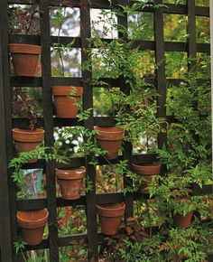 Garden Junk Ideas | containers? asked for and received - Garden Junk Forum - GardenWeb