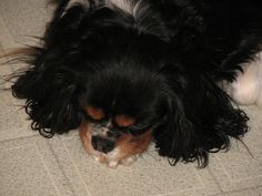 Tired by cobalt in CT, via Flickr