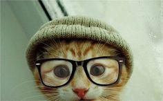 Hipster-Katzen mit coolen Brillen