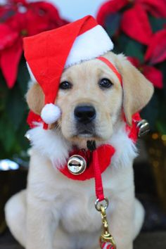 Tips to keep your dog happy and healthy this holiday season | Canine Companions Blog